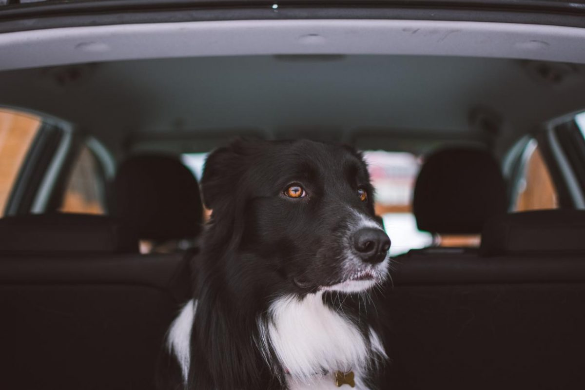 Bringing your pet to Germany